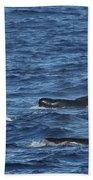 Long-finned Pilot Whales Beach Towel