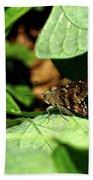 Long Tail Skipper Butterfly 1 Beach Sheet