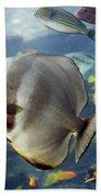 Longfin Batfish Beach Towel