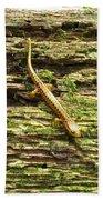 Longtailed Salamander Beach Towel