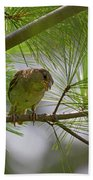 Looking Down - Common Sparrow - Passer Domesticus Beach Towel