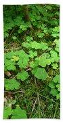 Looking For A Four-leaf Clover Beach Towel