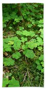 Looking For A Four-leaf Clover Beach Towel