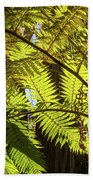 Looking Up To A Beautiful Sunglowing Fern In A Tropical Forest Beach Sheet