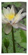 Lotus Blossom  Beach Towel