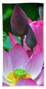 Lotus Blossoms  Beach Towel