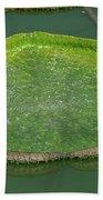 Lotus Leaf In The Marsh Beach Towel