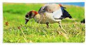 Loud Duck Colors Beach Sheet