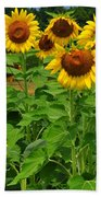 Louisa, Va. Sunflowers 3 Beach Towel