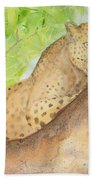 Lounging Leopard Beach Towel