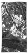 Lounging Squirrel Beach Towel