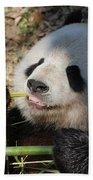 Lovable Giant Panda Bear With Big Paws Beach Towel