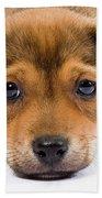 Love Me Puppy Beach Sheet