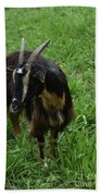 Lovely Billy Goat With Silky Black And Brown Fur Beach Towel