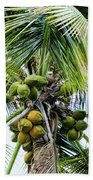Lovely Bunch Of Coconuts Beach Towel