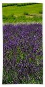 Lovely Lavender  Beach Towel
