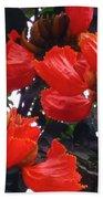 African Tulips Beach Sheet