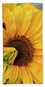 Lovely Sunflowers Beach Towel