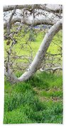 Low Branches On Sycamore Tree Beach Towel