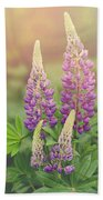 Lupine Sunrise Beach Towel