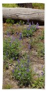 Lupines And A Log Beach Towel