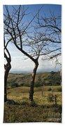 Lush Land Leafless Trees Iv Beach Towel