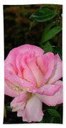 Lustrous Pink Rose Beach Towel