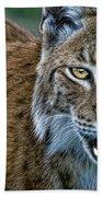 Lynx Licks Lips Beach Towel