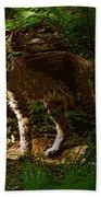 Lynx Rufus Beach Towel
