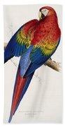 Macaw By_edward_lear Beach Towel