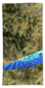 Macaw In Flight Beach Towel