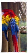 Macaw Beach Towel