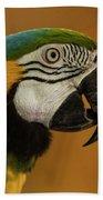 Macaw Portrait Beach Towel