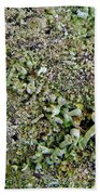 Macro Forest  Beach Towel