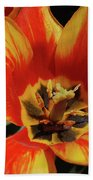 Macro Of A Blooming Striped Yellow And Red Tulip Beach Towel