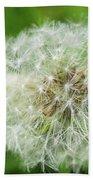 macro shot of a beautiful Dandelion. Beach Towel