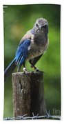 Mad Bird Beach Towel