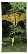 Madagascar Comet Moth Beach Towel