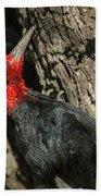 Magellanic Woodpecker - Patagonia Beach Towel