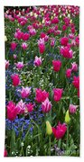Magenta And White Tulips Beach Towel