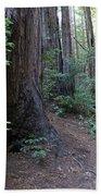 Magical Path Through The Redwoods On Mount Tamalpais Beach Towel