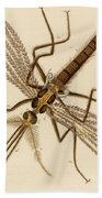Magnified Mosquito Beach Towel