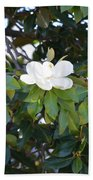 Magnolia Blooming 3 Beach Towel