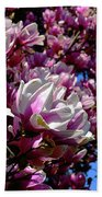 Magnolia In Spring Beach Towel