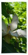 Magnolia Macrophylla  Beach Towel