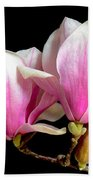 Magnolias In Spring Bloom Beach Towel