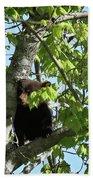 Maine Black Bear Cub In Tree Beach Towel