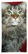 Maine Coon Portrait Beach Towel