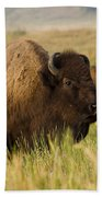 Majestic Bison Beach Towel