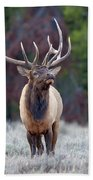 Majestic Bull Elk Beach Towel